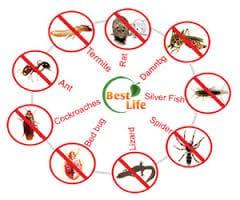 حشرات زاحفة