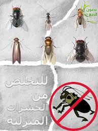 حشرات منزلية طائرة