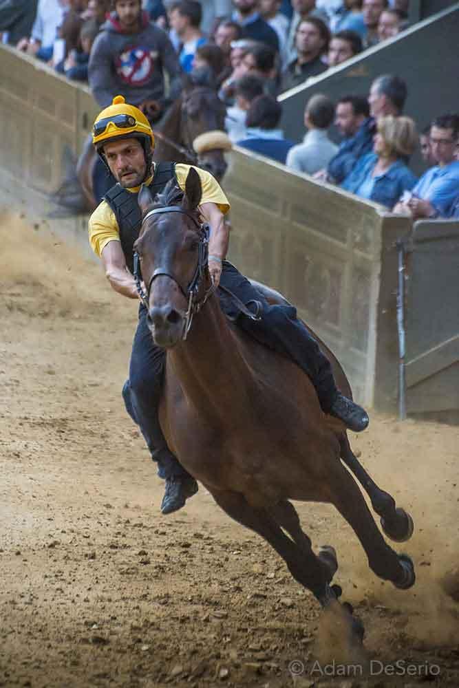 Practice Horse, Palio, Siena, Italy