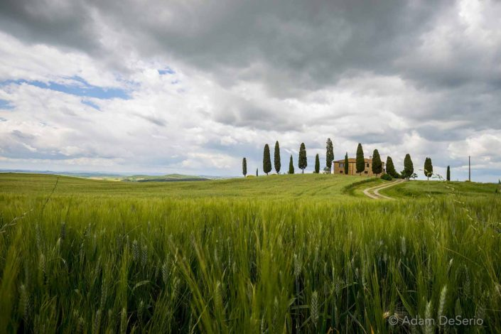 House Of Trees, Tuscany