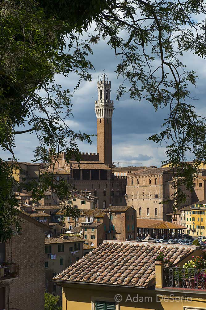 Siena Tower Tree, Italy
