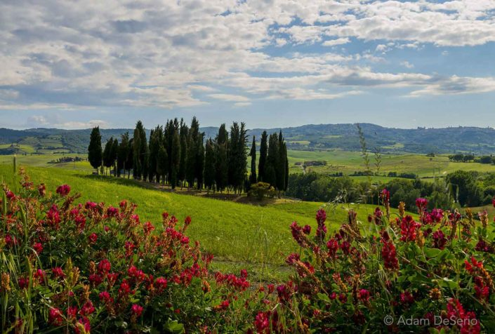 Trees And Flowers, Tuscany