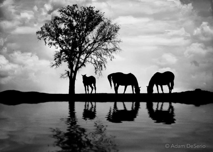 Horse Reflection, Kentucky