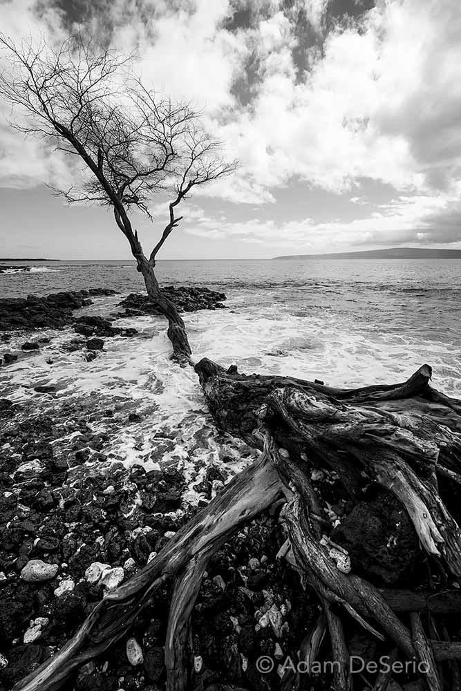Beach Tree Black and White
