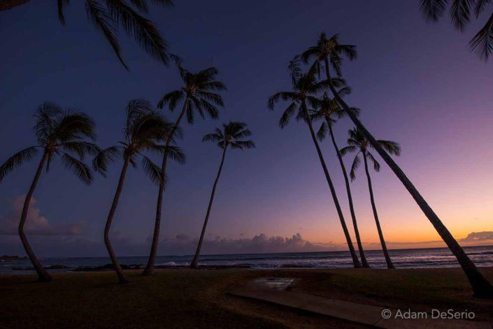 Palm Tree Mystery
