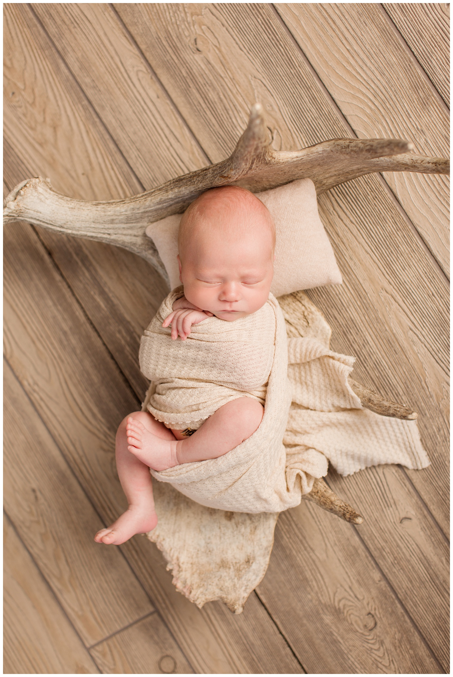 Newborn baby wrapped in a nude color swaddle laying in a moose antler on a wooden floor