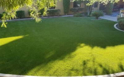 Give Pets the Lawn They Need with Easy-to-Clean Artificial Turf