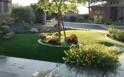 Arizona Turf Depot experts share their tips on caring for synthetic grass in Arizona