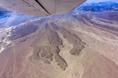 Nazca-9218