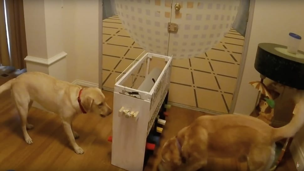 This Multiplayer Game For Dogs Is The Most Wholesome Thing You'll Ever See (VIDEO)