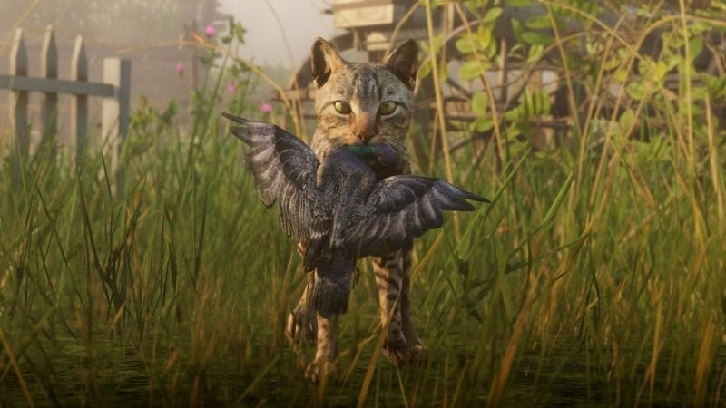Red Dead Redemption 2 Players Launch Petition To Pet Cats