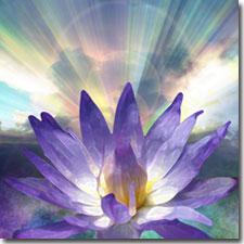 lotus_light_PAcademy_med