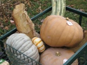 Pumpkin targets