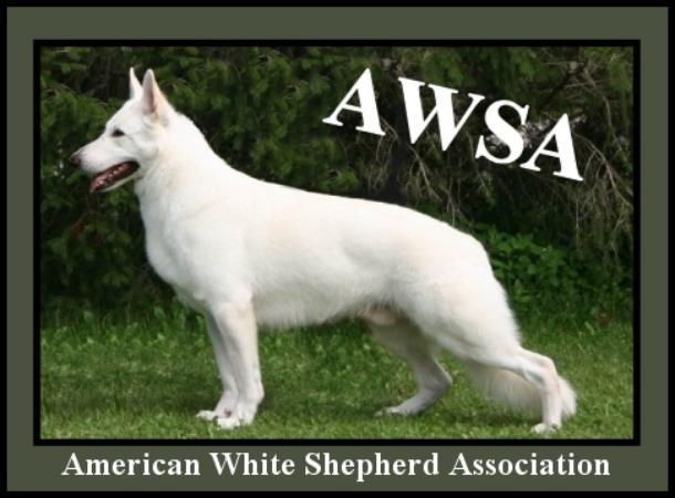 AWSA dog