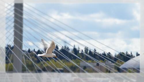 Tacoma Dome Seagull