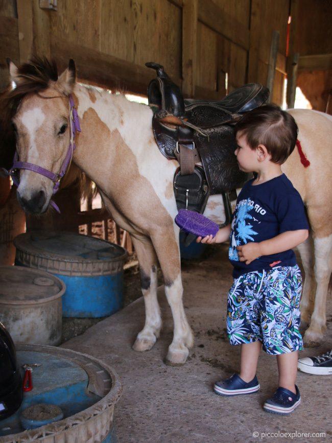 Turtle Bay Resort Keiki Pony Experience