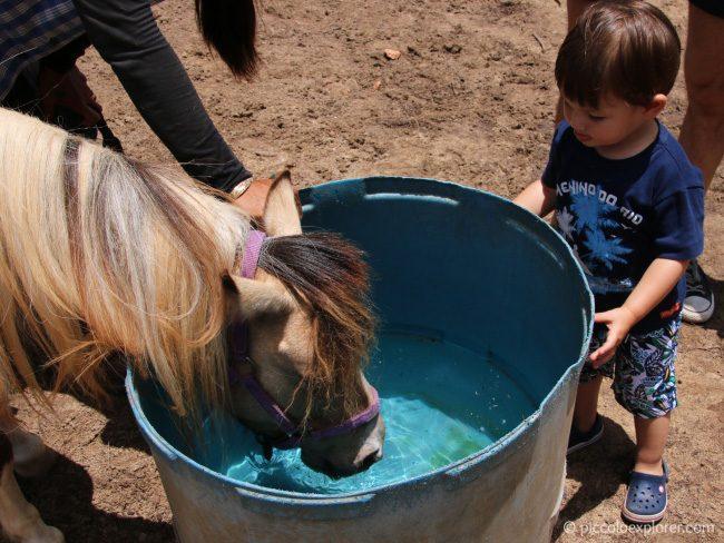 Turtle Bay Resort Oahu Pony Experience