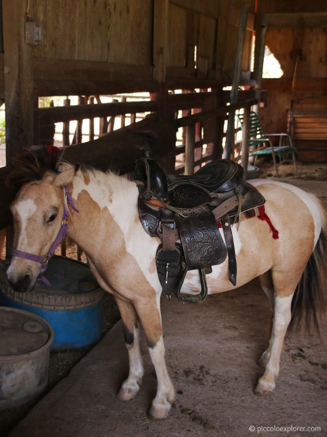 Review Turtle Bay Resort Pony Experience