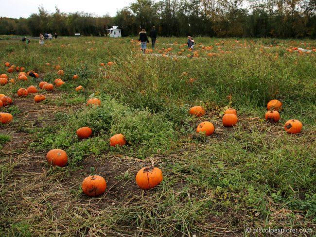 Garsons Farm Pumpkin Patch