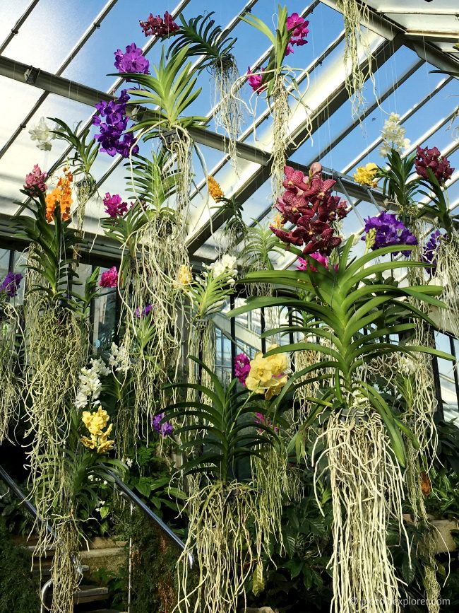 Orchids Festival at Kew Gardens
