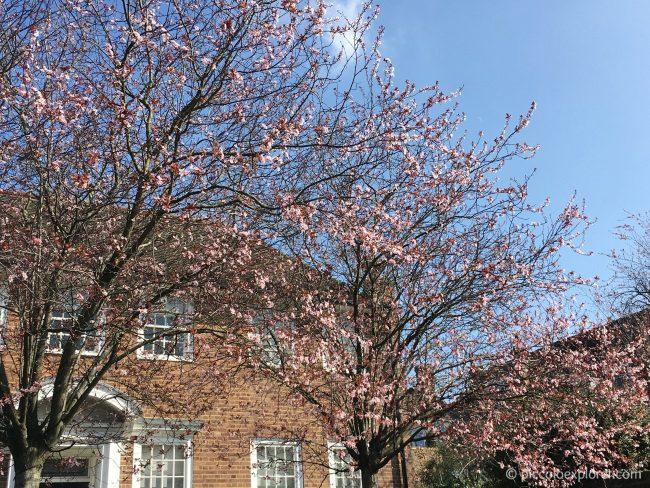 Holland Park, Kensington London