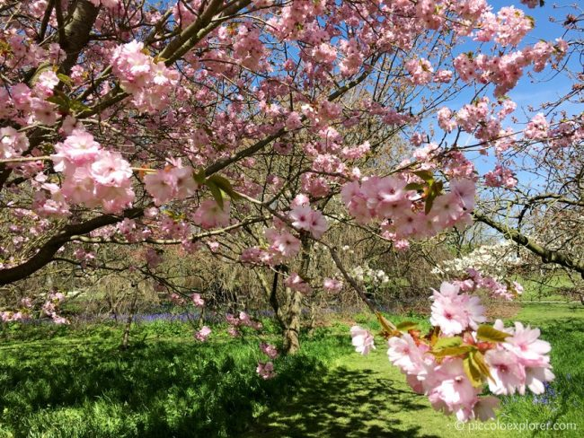 Spring at Kew Gardens
