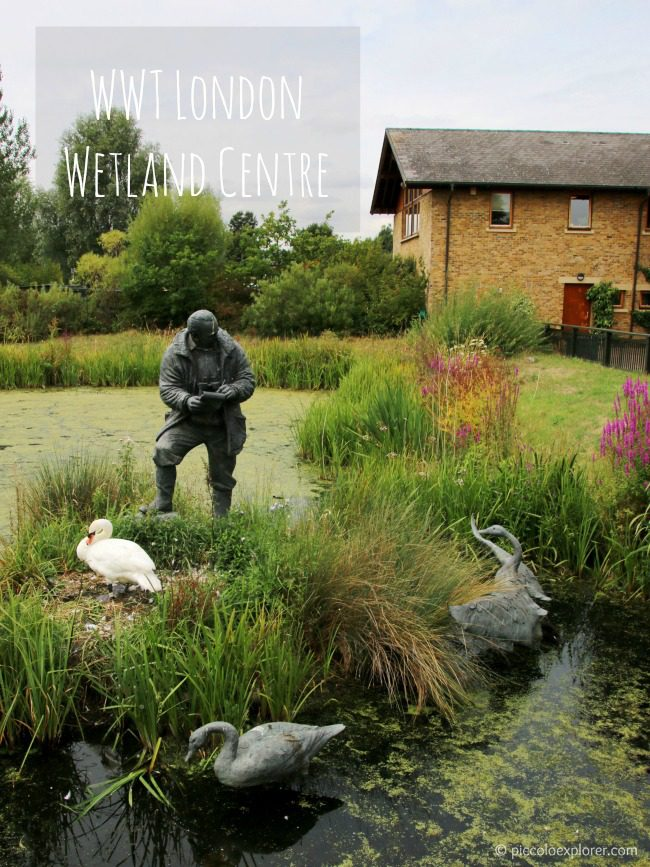 Activities at WWT London Wetland Centre