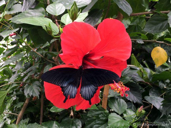 London Zoo Butterfly Exhibit