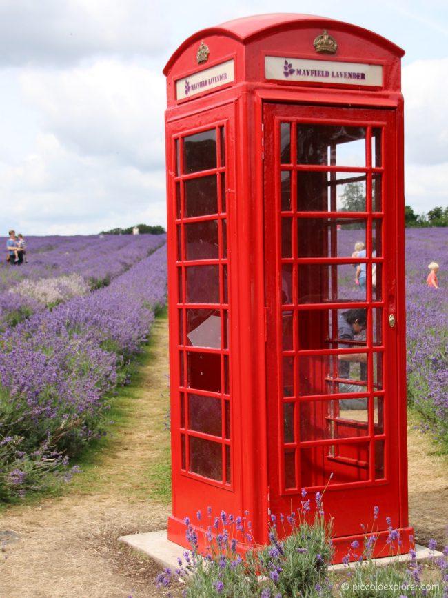 Mayfield Lavender Gardens, Surrey