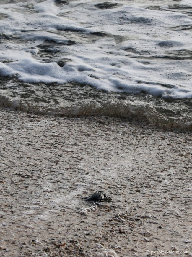 Bali Sea Turtle Release, Kuta Beach