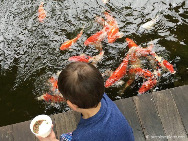 Koi fish pond, Padma Resort Legian