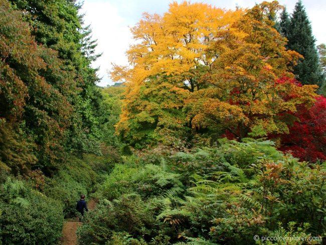 Autumn at National Trust Winkworth Arboretum