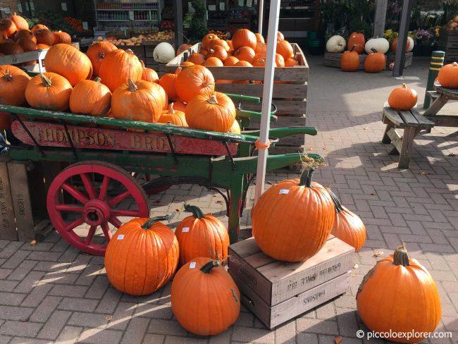 Garsons Farm Pumpkins Surrey