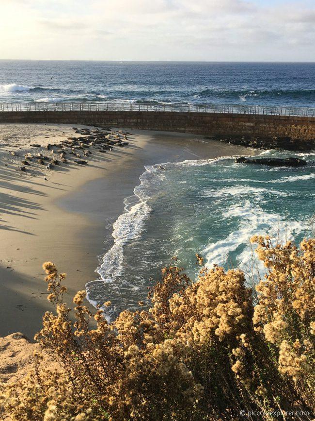 Seals at Children's Pool Beach, La Jolla, CA