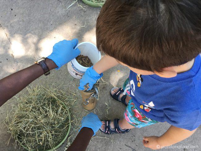 Animal Interaction Activity, Animal Kingdom Lodge, Orlando