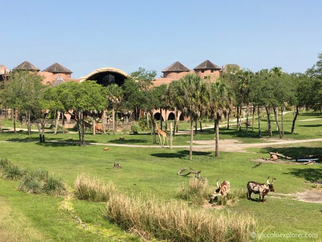 Savanna View Room at Disney's Animal Kingdom Lodge, Orlando, FL