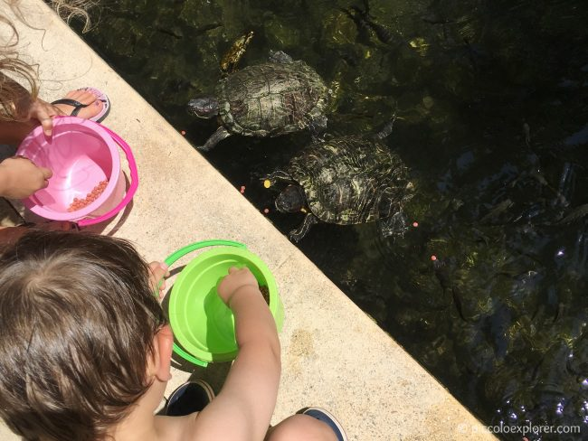 Feeding Turtles, Padma Resort Legian, Bali