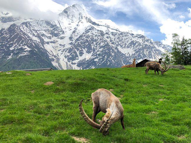 Merlet Animal Park, Les Houches