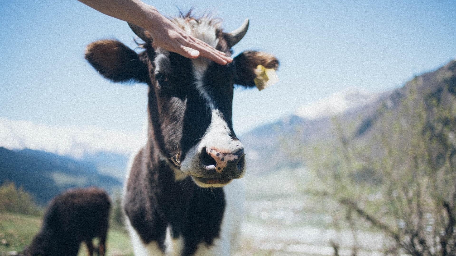 Animal Chiro Helps FFA