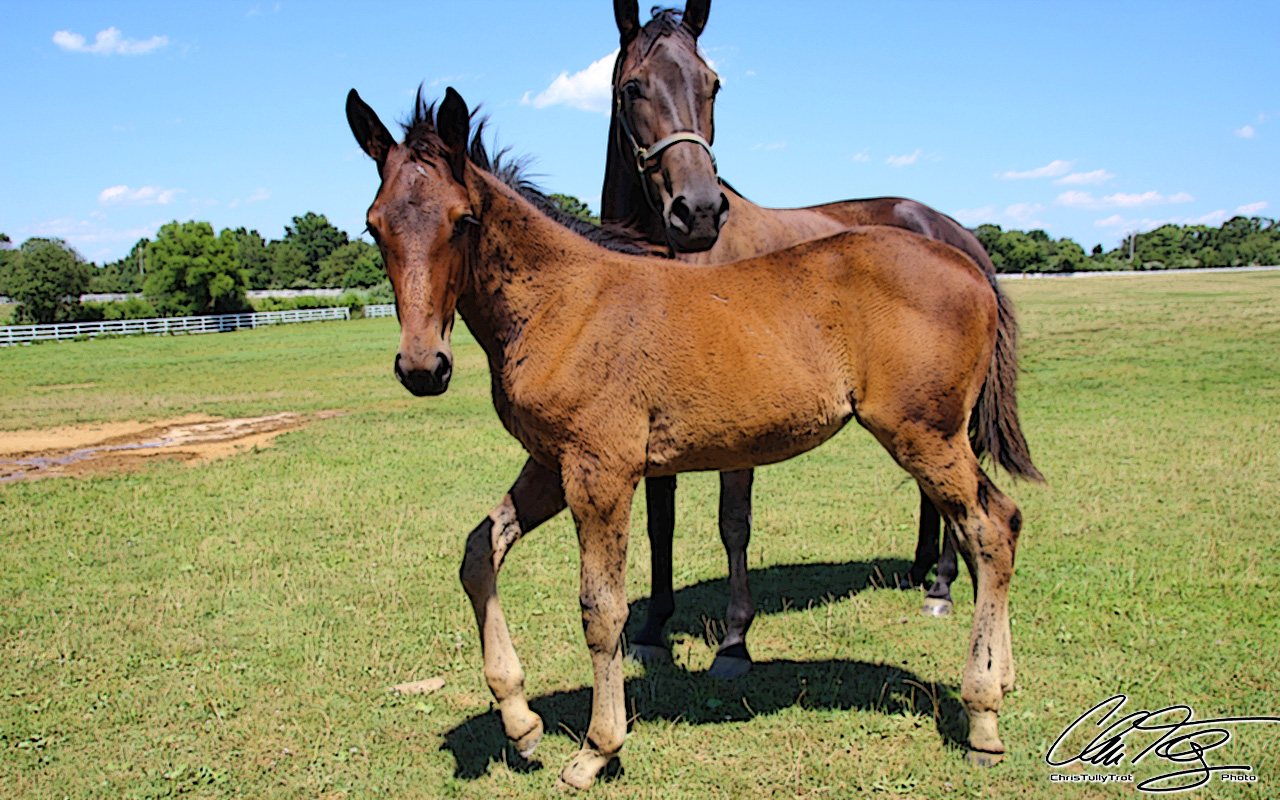 Mare-n-Foal-0906-Snow_Ridge_Farm-ChrisTullyTrot-PHOTO