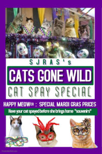 Cats Gone Wild! @ ONLINE ONLY!