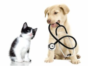 Vaccine Clinics @ South Jersey Regional Animal Shelter