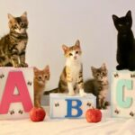 kittens, posing, siblings, litter, babies, ABC, blocks
