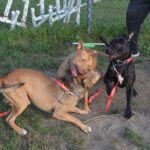 dogs, playing, play group