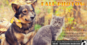 Fall Photos @ South Jersey Regional Animal Shelter