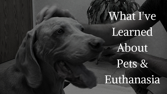 Pets and the Responsibility of Euthanasia