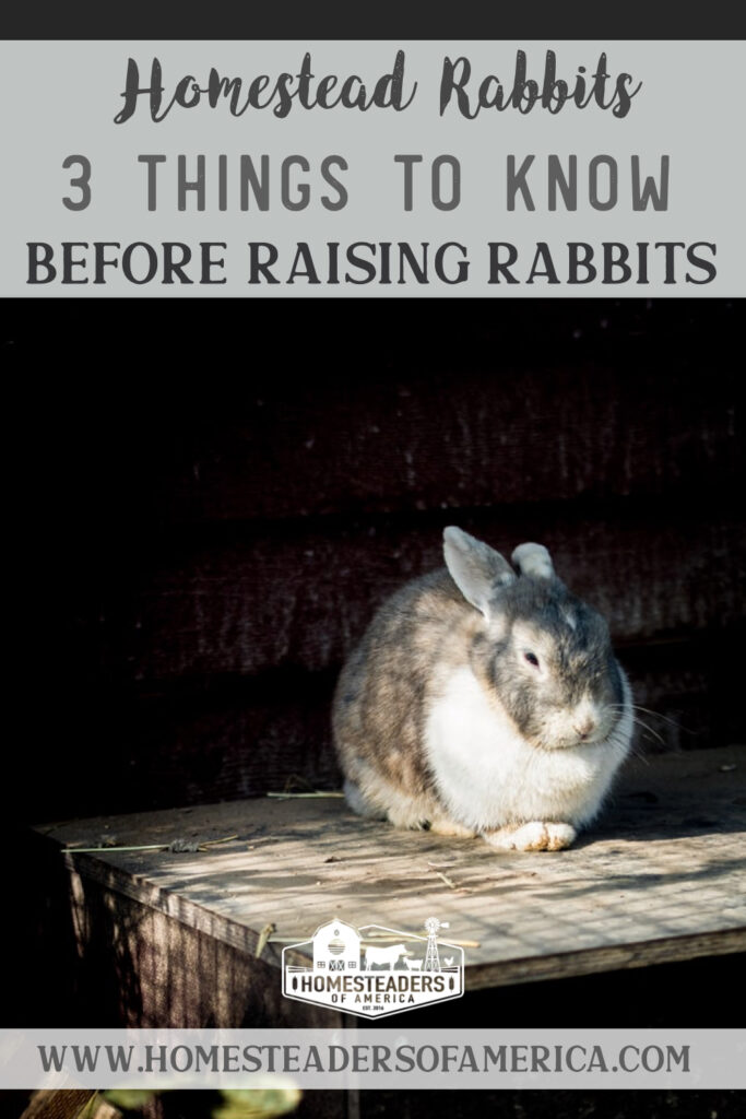 3 Things to Know Before Raising Rabbits on the Homstead #meatrabbits #raisingrabbits #rabbits #homesteading #smallfarm