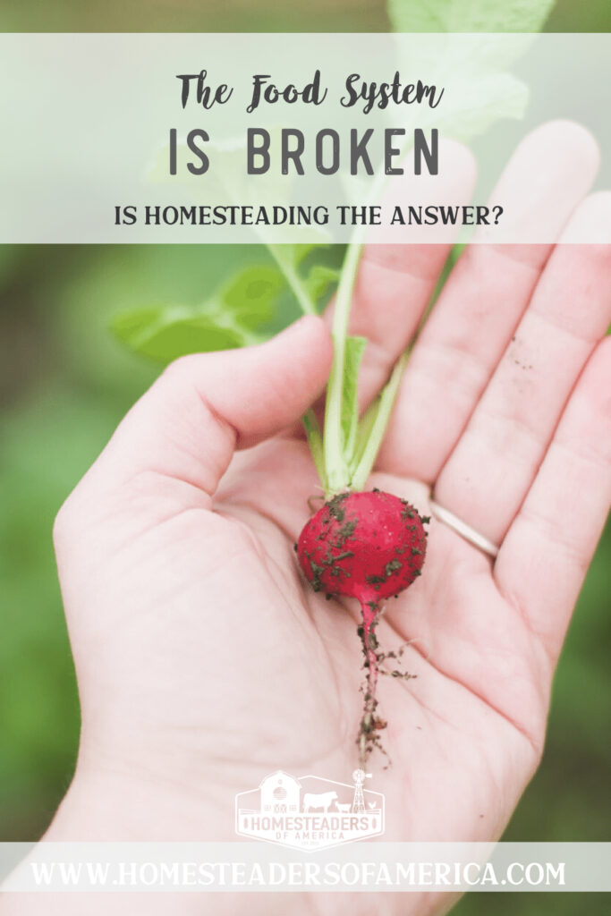 Our food system is broken. It's not breaking, it is already broken. But while the national economy is collapsing, the homesteading economy is awakening. #homestead #homesteading #localfood #farmtofork #selfsufficiency