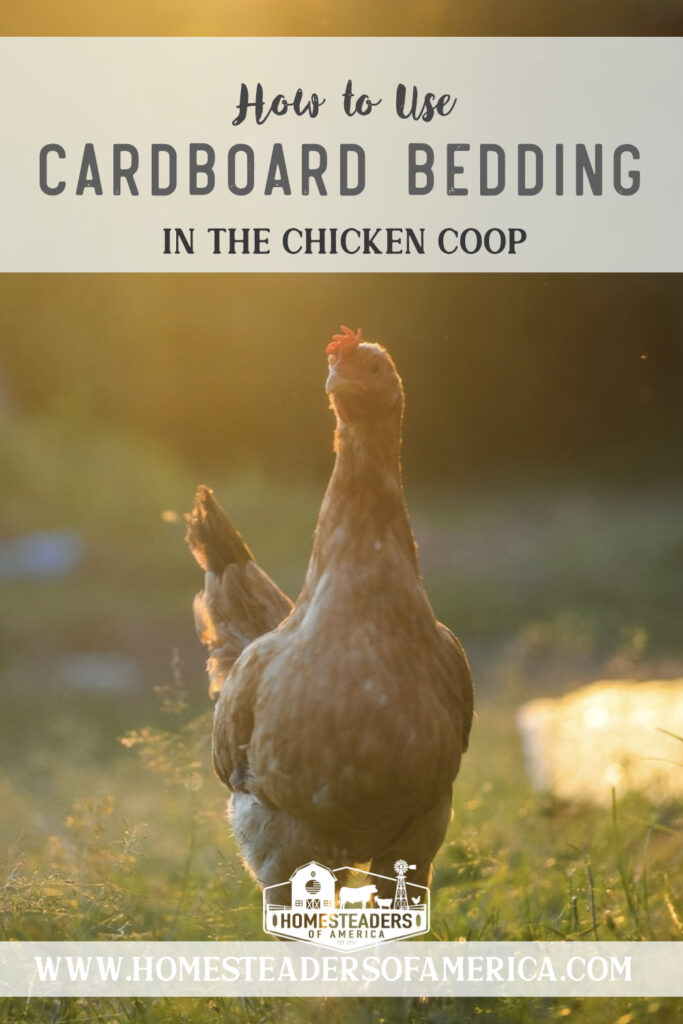 Cardboard coop bedding is a great alternative to using straw or sand in the coop. Cardboard is biodegradable, making it an excellent item for the garden. #homestead #homesteading #chickens #backyardchickens #chickencoop #selfsufficiency