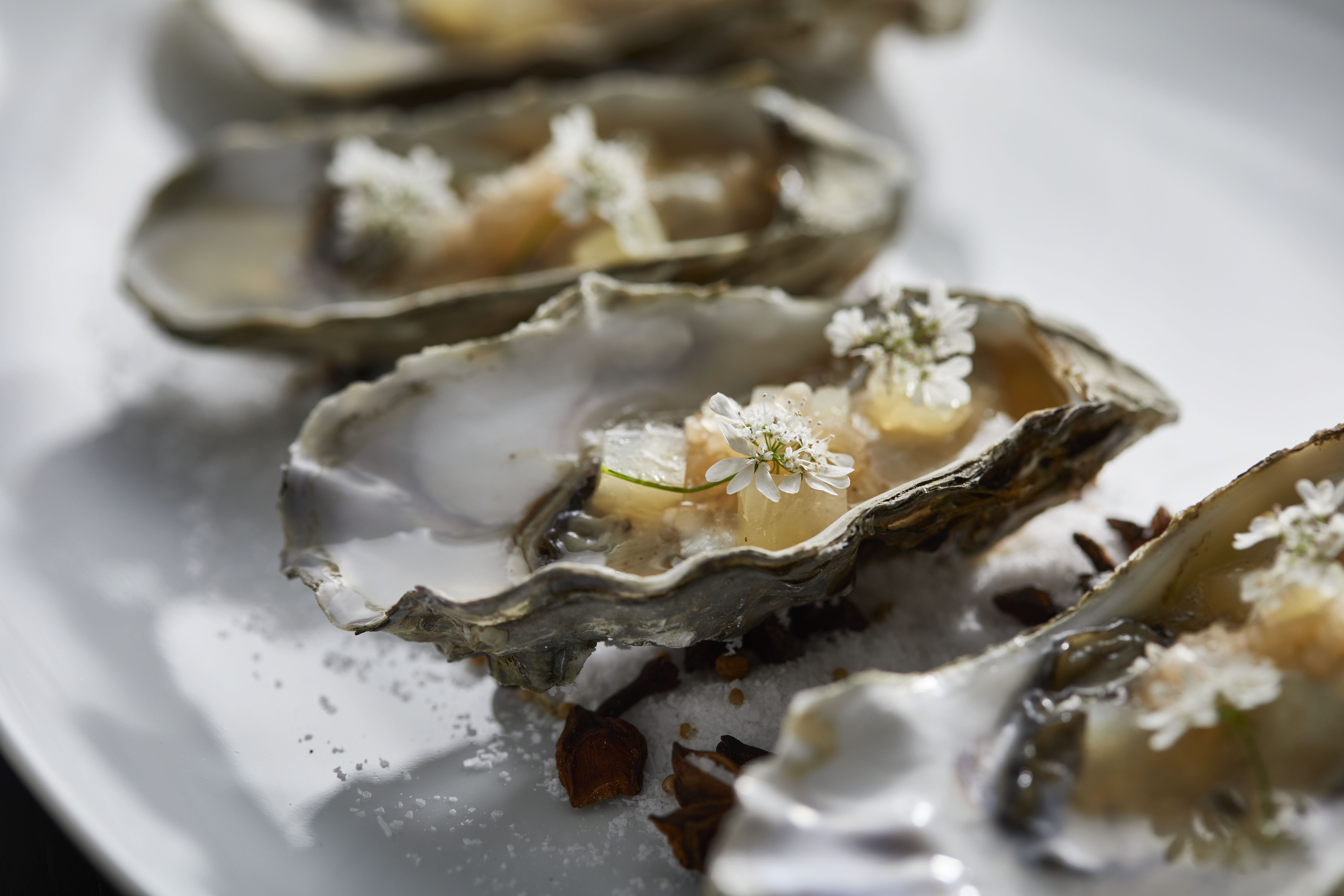 Oysters_Paul Strabbing